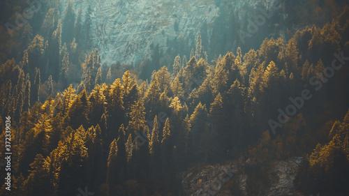 kumrat forest Fototapet