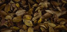 Autumn Leaves On Floor