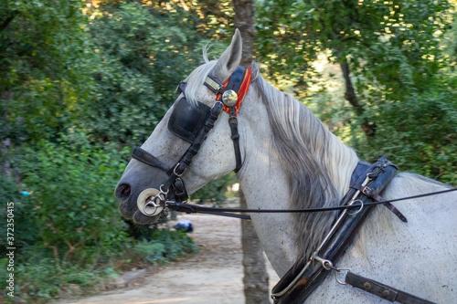 Photo caballo andaluz en sevilla