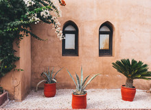 Succulents And A Terracotta Wall.