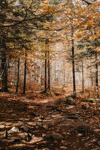 Leaves Changing In A Wooded Forest For Autumn