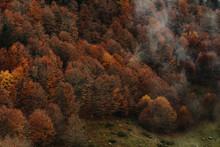 Landscape Photography Of Autum...