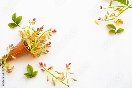 tamarind flower ,yellow flowers ylang ylang in cone herbal plant local flora of Fototapeta