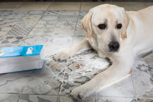 Dirty Guilty Dog Made Mess And...