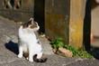 振り向いている猫