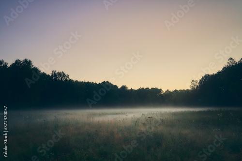 Cuadros en Lienzo Mist over the meadow