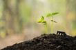 shovel with sapling for planting in home garden, gardening. copy space, gardening or planting concept. spring planting. early seedlings grown from seeds. agriculture. green nature bokeh background.