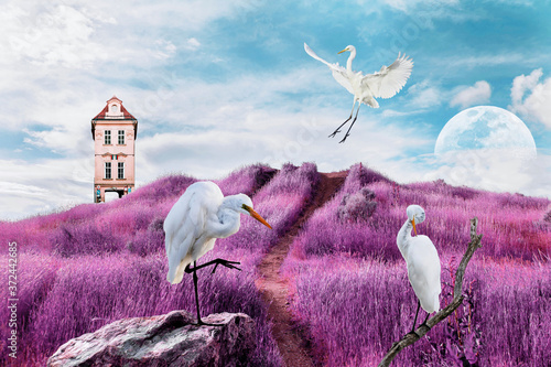 Fotografiet contemporary art collage of white birds on surreal landscape