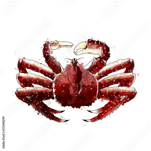 Fotografering King Crab, watercolor isolated illustration of a crustacean.