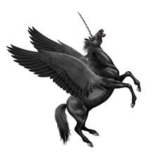 Cheval, Licorne, Volant, Aile, En Vol, Animal, Faune, Mythique, Sauvage, Ciel, Empennage, Coloré, Fantastique, Corne, Noir, , Attaque