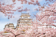 Himeji Castle With Sakura Cherry Blossom Season