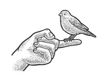 Canary Pet Bird Sitting On A Finger Sketch Engraving Vector Illustration. T-shirt Apparel Print Design. Scratch Board Imitation. Black And White Hand Drawn Image.