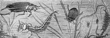 Illustration Of Insects In The...
