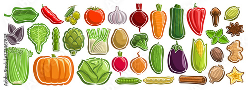 Fototapeta Vector set of Vegetables, group of cut out cartoon indian spices, various minimal design vegetable tags for healthy nutrients, lot collection of agriculture simple icons isolated on white background. obraz