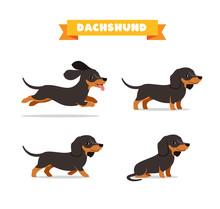 Cute Dachshund Dog Animal Pet ...