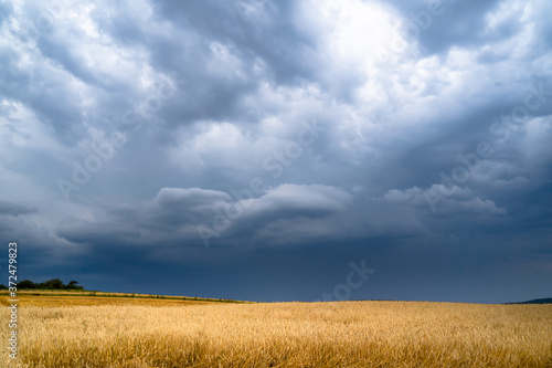 Fotografie, Obraz Dramatic storm clouds timelapse over rye fields