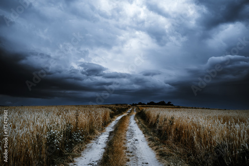 Fototapeta Dramatic storm clouds timelapse over rye fields