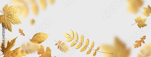 Fotografie, Tablou Golden flying autumn leaves of different shapes on light gray background