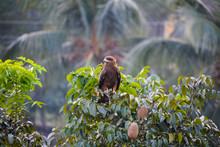Thinking Eagle