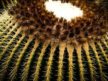 Cactus Macro Color