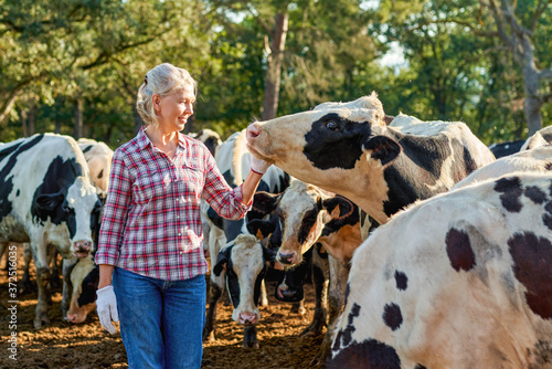 Fotografering Farmer woman on cow farm around herd