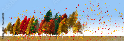 Fotografia Bold and bright colors of autumn leaves are seen on a line of trees as a strong wind blows the leaves across the image