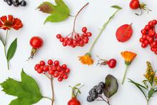 Autumn Floral Composition. Pla...