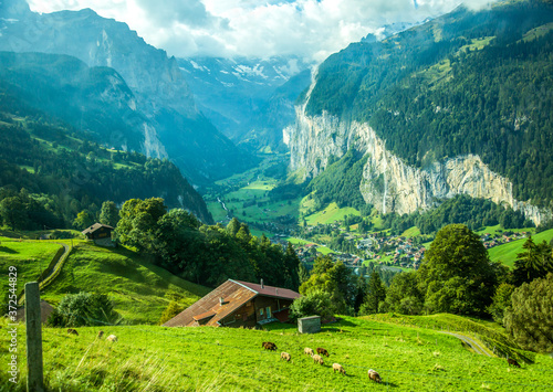 Fotografie, Obraz Sheep grazing on a mountain hillside, Lauterbrunnen valley and village of Laturbrennen, Switzerland in the background