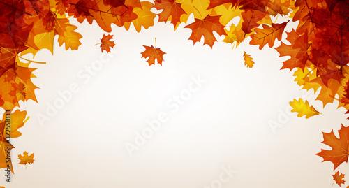Obraz Autumn red oak and maple leaves. - fototapety do salonu