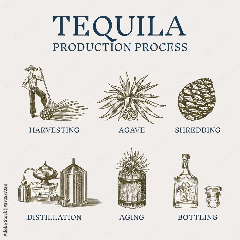 Fototapeta Tequila production process. Glass bottle, shot with lime, Distilled alcohol, blue agave Plant, barrel and farmer and harvest. Retro poster or banner. Engraved hand drawn vintage sketch.