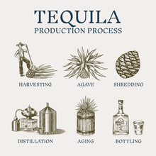 Tequila Production Process. Gl...