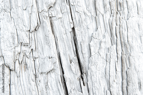 Texture of a driftwood with deep longitudinal cracks Canvas Print
