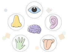 五感イメージと脳・アイコンセット