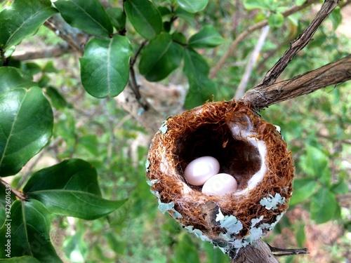 Photo fauna animalia corpo delicado jeito de voar beija flor (ninho) trochilidae