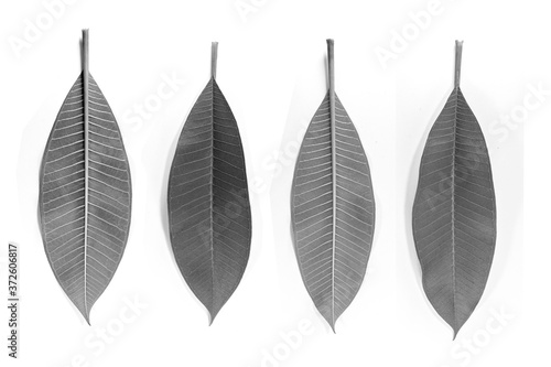 Set of frangipani leaves black and white both front and back Fototapete
