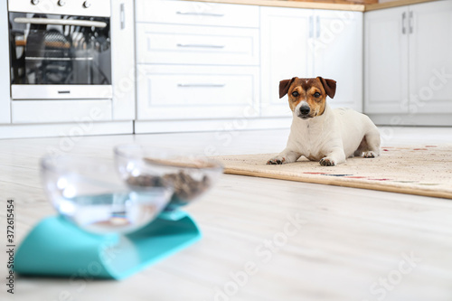 Canvastavla Cute dog lying on floor in kitchen