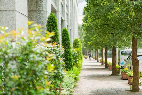 Fototapeta sidewalk and row of trees in italian street in tokyo, japan