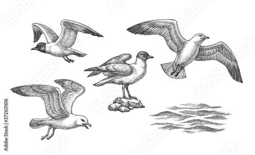 Foto Hand drawn illustration, sea gulls and waves, set.