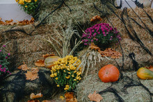 Pumpkins And Autumn Flowers In...