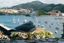 Close-up Of A Seagull In The ...