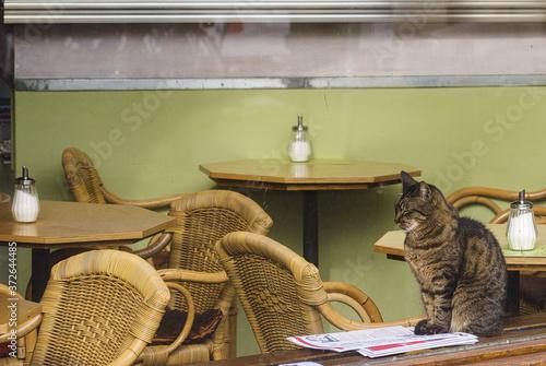 Fototapeta cat reads a magazine in a cafe in Amsterdam