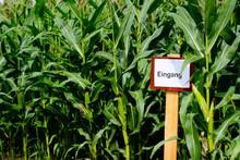 Entrance To The Corn Maze. Fin...