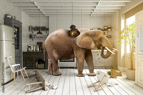 Chaos in der Küche – Elefant sucht nach Nahrung Wallpaper Mural