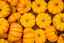 Many Mini Pumpkins At A Farmers Open Market. Autumn Harvest.