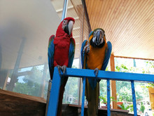 Talkative Cute And Colorful Parrots