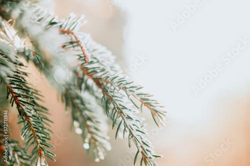 Obraz na plátně branche de sapin sous la neige