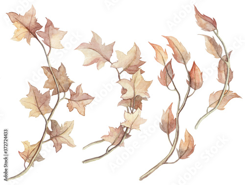 Fototapeta Collection of hand painted watercolor leaves