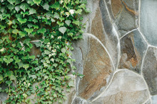 Green Plants On A Stone Wall, ...