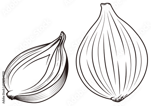 Fotografie, Obraz whole and half garlic in vectors and lines
