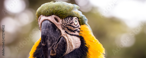 portrait of an old Brazilian macaw, emblematic species of the Brazilian and Amazon savannah Fototapete